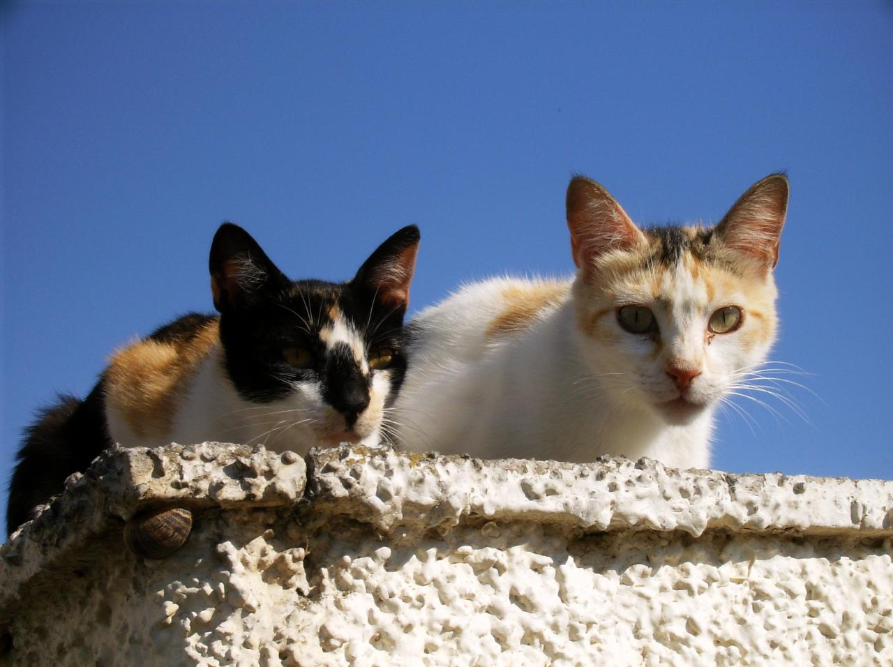 Chats d'ailleurs