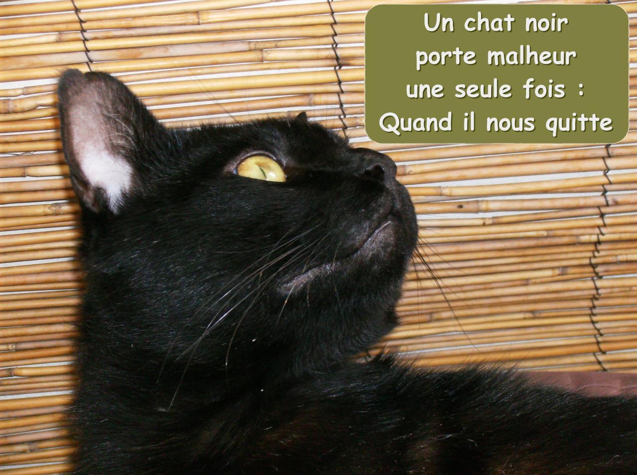 chatnoirmalheur