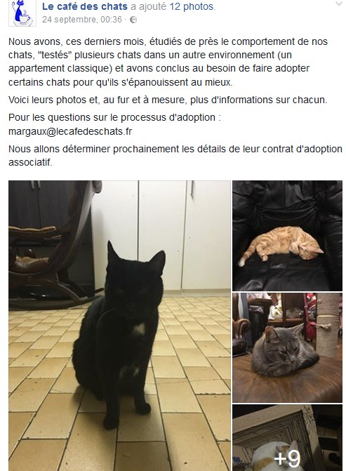 Chats mal adaptés