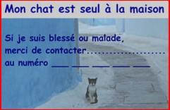 Chat seul 2